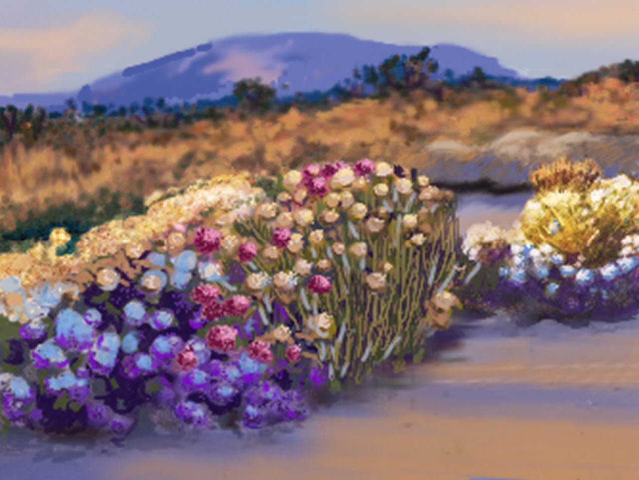 California Desert in Bloom