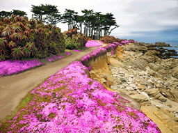 Flower Path Pacific Grove, CA
