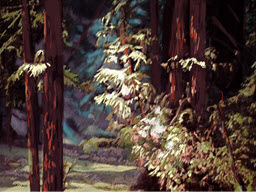 Walk in the Redwoods